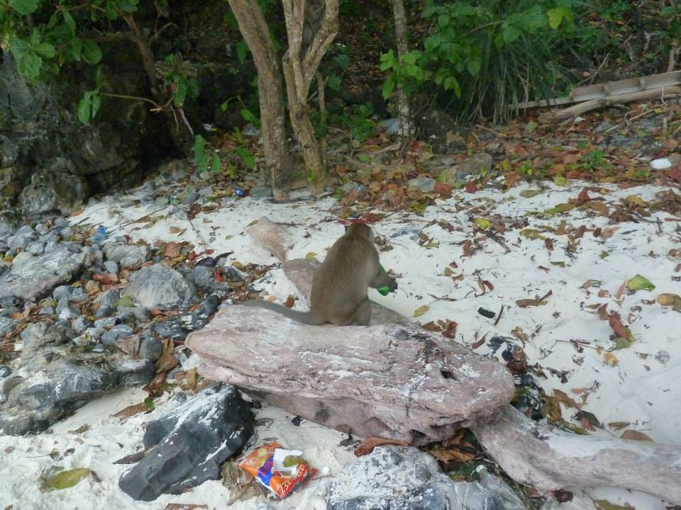 A monkey drinking from a bottle of Sprite