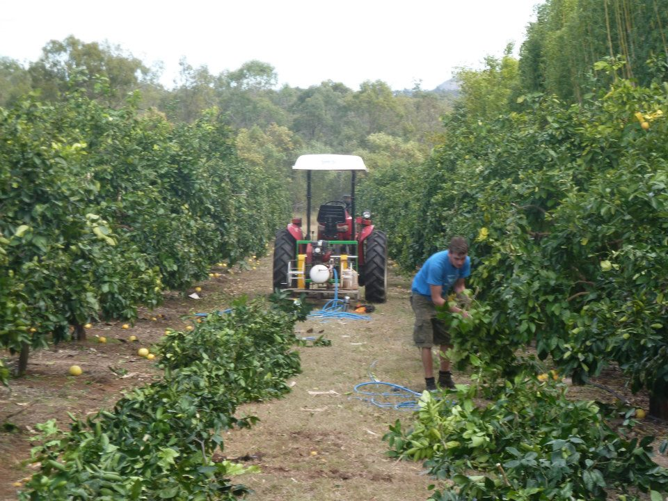 Me working in an orchard in Queensland